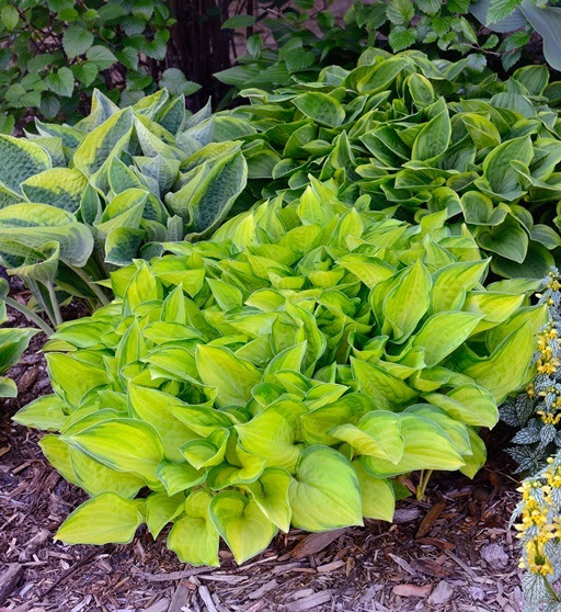 shade plants for gardening